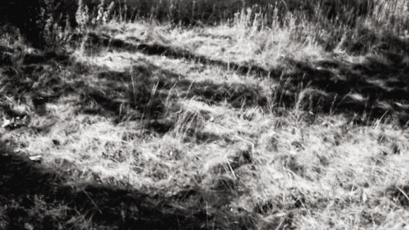 Kral • Photography » Projekt »Cobweb Summer
