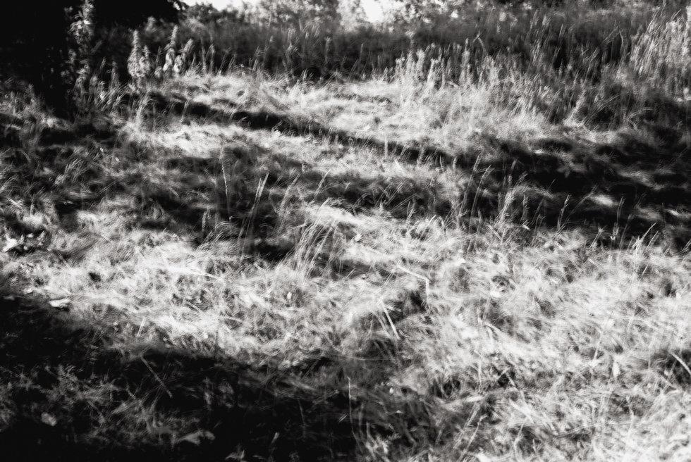 Cobweb Summer