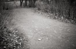 Kral • Photography » Projekt »Frühling