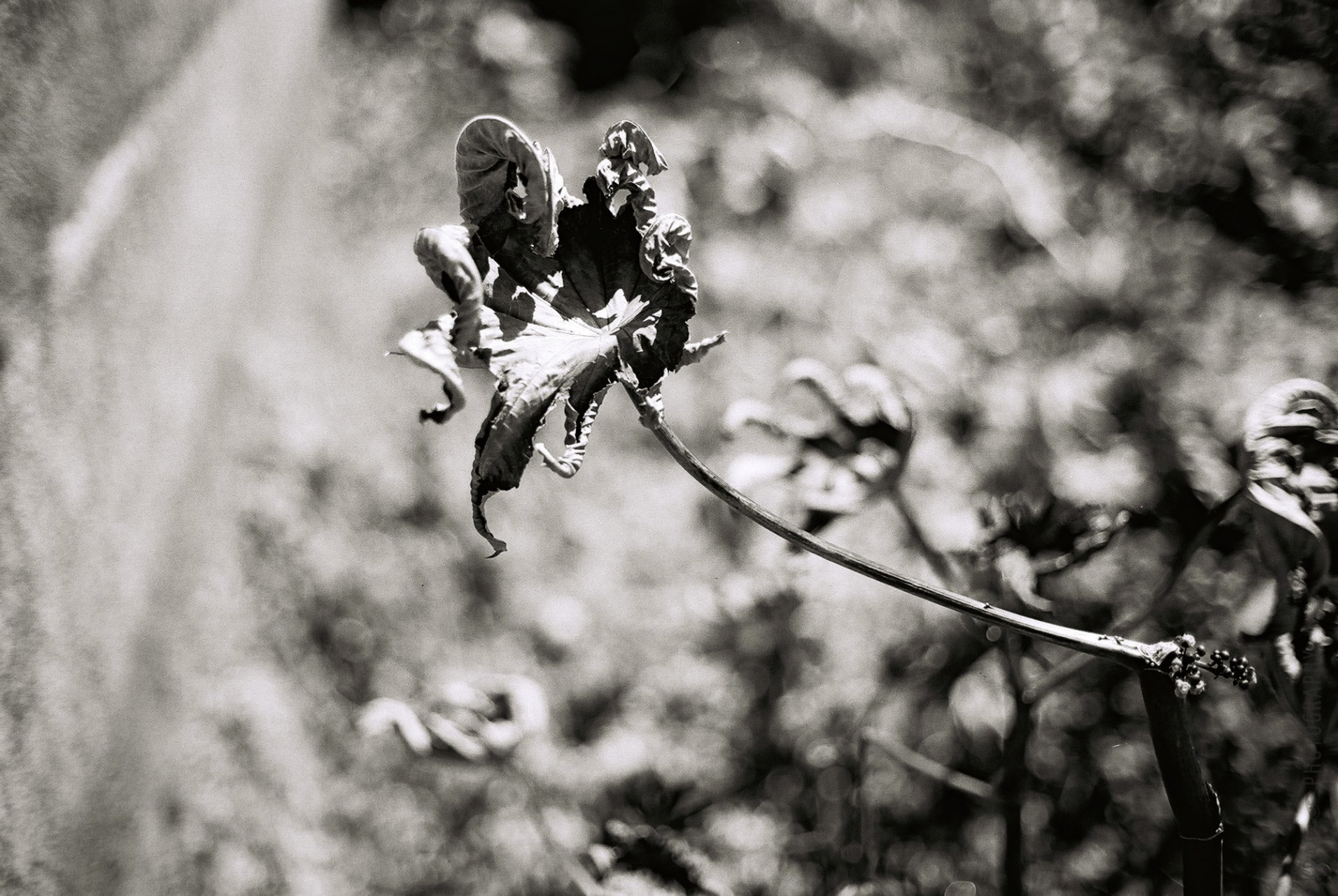 © Holger Kral • Photography - Go04_02_33 - 2004, blackwhite, flores, gomera, journey, landscape, nature - photo #1