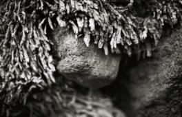Kral • Photography » Projekt »Flores II