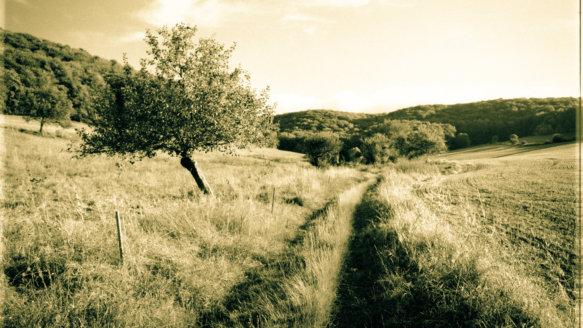 Kral • Photography » Projekt »Spätes Feld