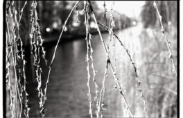 Kral • Photography » Projekt »Neu draussen