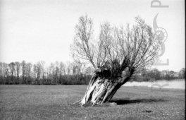 Kral • Photography » Projekt »Unten am Fluß