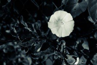 © Holger Kral • Photography - Friedhofsecken - Berlin, Cityscape, Fujifilm X70, On my Doorstep - photo #6