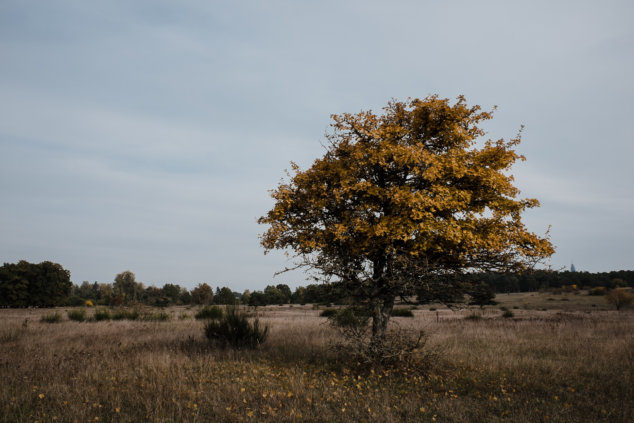 © Holger Kral • Photography - Land - Autumn, Fall, Fujifilm X70, Germany, Landscape - photo #2