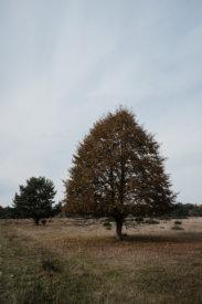 © Holger Kral • Photography - Land - Autumn, Fall, Fujifilm X70, Germany, Landscape - photo #6