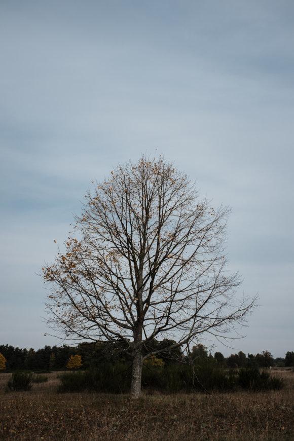 © Holger Kral • Photography - Land - Autumn, Fall, Fujifilm X70, Germany, Landscape - photo #7