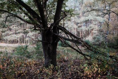 © Holger Kral • Photography - Land - Autumn, Fall, Fujifilm X70, Germany, Landscape - photo #12