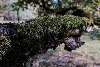 © Holger Kral • Photography - Land - Autumn, Fall, Fujifilm X70, Germany, Landscape - photo #13