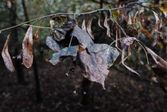 © Holger Kral • Photography - Land - Autumn, Fall, Fujifilm X70, Germany, Landscape - photo #16
