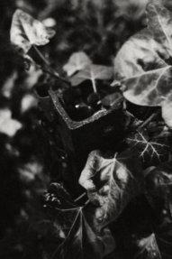 © Holger Kral • Photography - Last American Spirits - Berlin, Cityscape, Fujifilm X70, On my Doorstep - photo #9