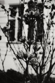 © Holger Kral • Photography - Last American Spirits - Berlin, Cityscape, Fujifilm X70, On my Doorstep - photo #10