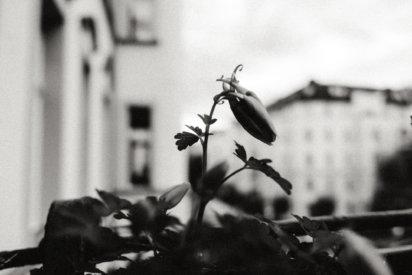 © Holger Kral • Photography - Last American Spirits - Berlin, Cityscape, Fujifilm X70, On my Doorstep - photo #33