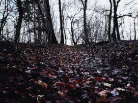 © Holger Kral • Photography - Land geschafft - Fall, Germany, Landscape - photo #5