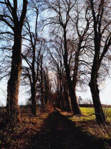 © Holger Kral • Photography - Land geschafft - Fall, Germany, Landscape - photo #8